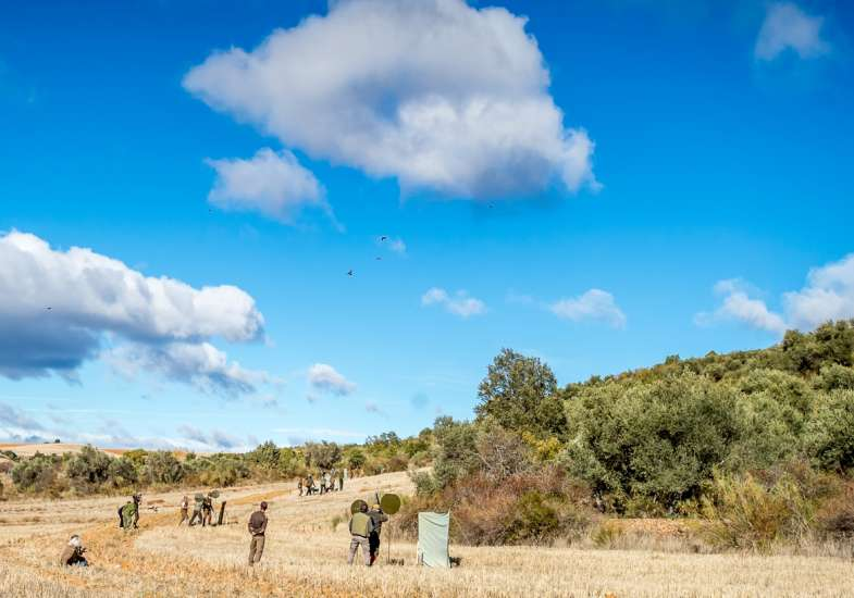 27 Gallery Partridge Shooting In Spain